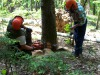 Forestali da oggi tutti al lavoro in Sicilia, al via 70 progetti per 53 milioni