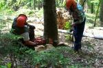 Stipendi arretrati e promozioni: i forestali tornano in piazza