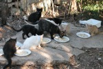 San Vito, installati i primi rifugi per i gatti randagi