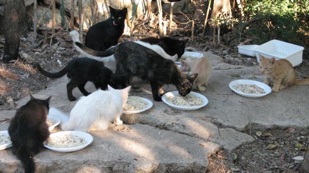 animali, gatti randagi, rifugi, san vito lo capo, Trapani, Cronaca