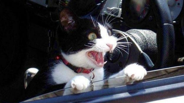 A12, gatto, genova, incidente, Sicilia, Cronaca
