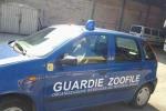 Guardie eco-zoofile, minacce alla vice coordinatrice di Trapani