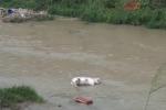 Maiale morto galleggia sul fiume Oreto, chiesta la rimozione