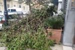 Vento e danni a Palermo: cade un albero in centro, ritardi nei voli - Video