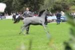 Cavalli, gara di bellezza a Palermo: 150 purosangue da tutto il mondo