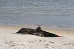 Disastro ambientale in Messico, in aumento i delfini morti