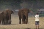 Li chiama per nome e loro corrono da lui: in Thailandia l'amico degli elefanti - Video
