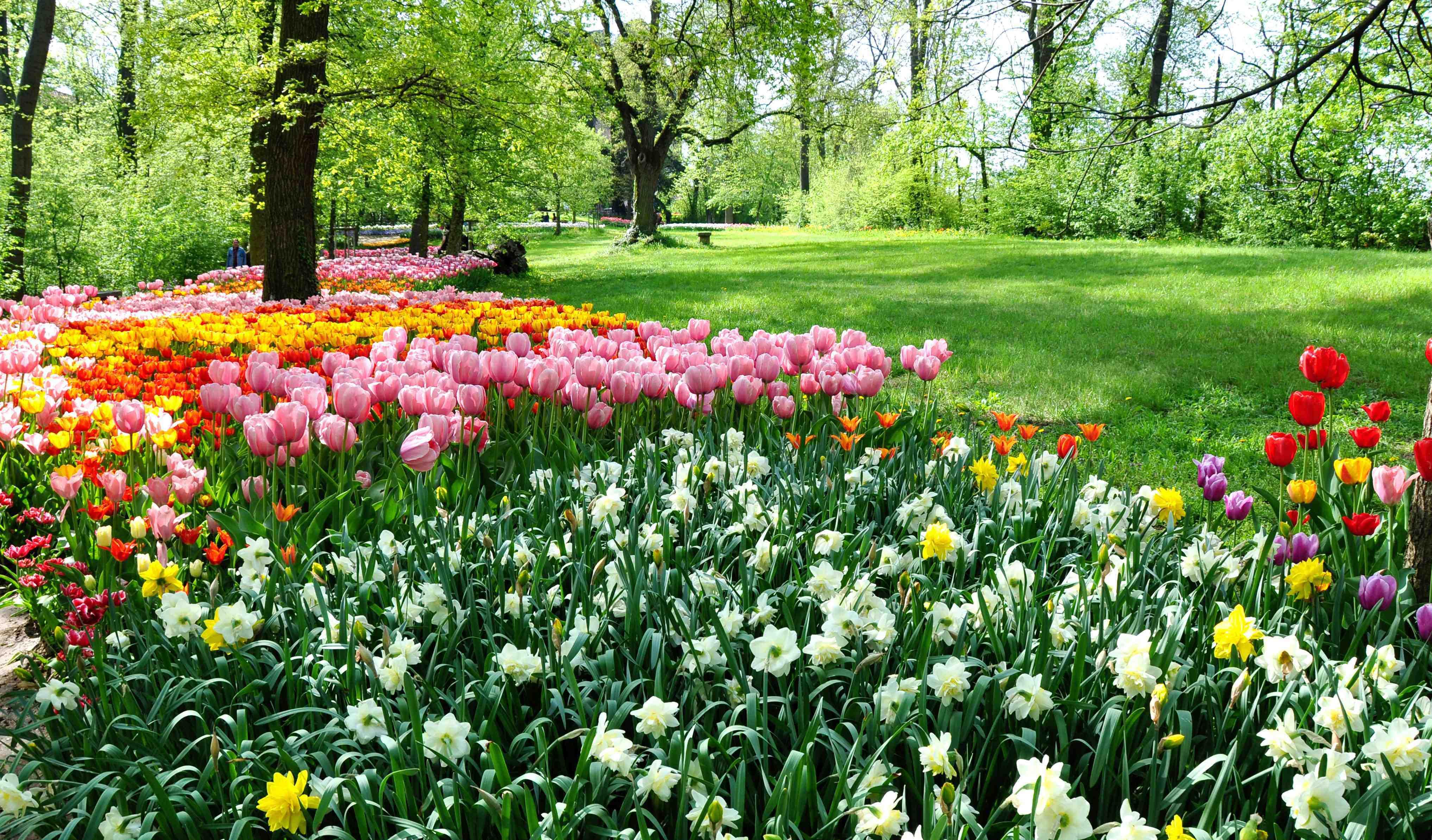 Quale sarà la fioritura più bella d Italia  Al via un sondaggio ... 20970b8096b