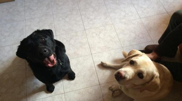 cane, cieco, Sicilia, Vita