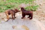 """Masha e Grisha, salvi gli orsi dello """"zoo più triste del mondo"""" - Video"""