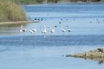 Saline di Priolo: nel 2017 quasi 12 mila visitatori nella riserva