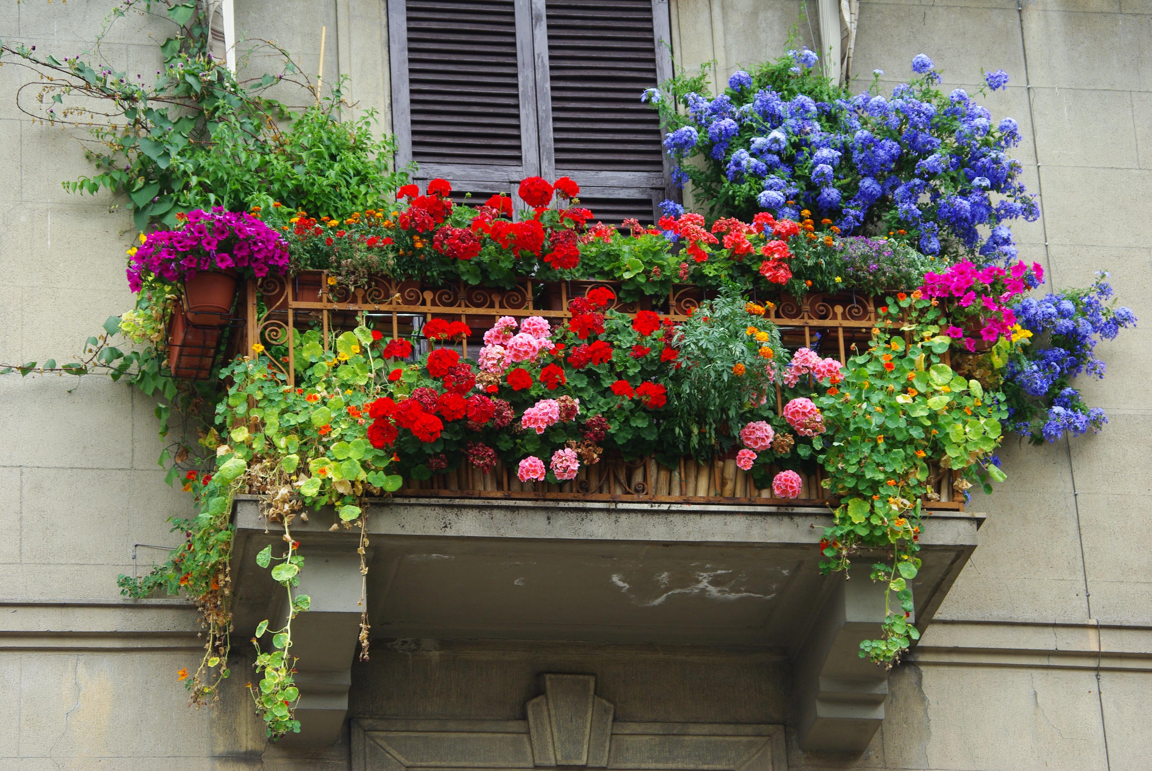 Enna in fiore premi a chi abbellisce i balconi for Fiori balcone perenni