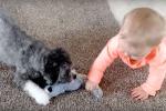 """""""Il giocattolo è mio"""", la dolce lotta tra la bimba e il suo cagnolino"""