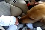 Cani e gatti incontrano i bimbi per la prima volta: il video