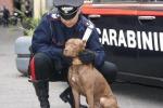 Organizzavano combattimenti tra cani: obbligo di dimora per due giovani
