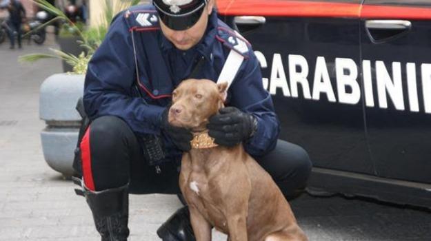 animali, cani, valderice, Trapani, Cronaca