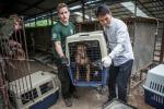 Dagli allevamenti ad animali domestici: nuova vita per i cani in Corea del Sud