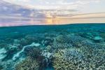 Sbiancamento record: ucciso il 35% della Grande Barriera Corallina