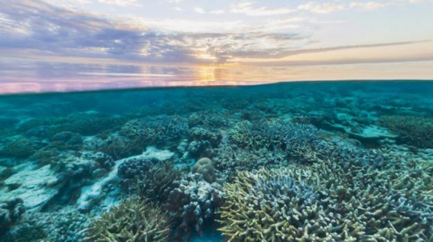 grande barriera corallina, sbiancamento record, Sicilia, Vita