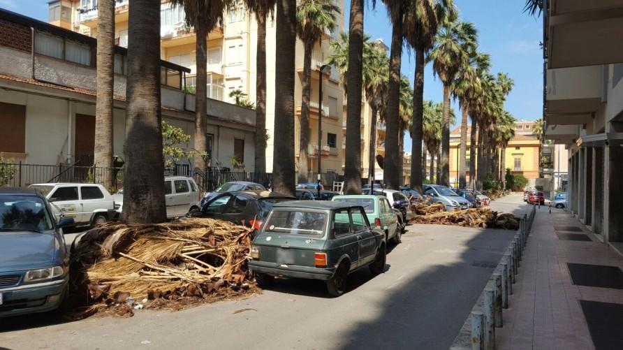 Ufficio Collocamento A Palermo : Palme secche in strada a palermo disagi e pericoli per i passanti