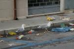 Gabbiani a Palermo, colpa anche dei rifiuti lasciati per strada