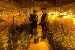 Piantagione di marijuana a Falsomiele, un arresto - Le foto