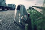 Accosta l'auto e abbandona cane per strada a Palermo: denunciato anziano