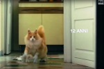 """""""Lo spot istiga a cucinare i gatti"""", Aidaa denuncia le Poste - Il video"""