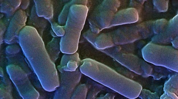 batterio più veloce del mondo, laboratorio, Sicilia, Società