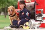 Cercò sopravvissuti per 10 giorni: è morto l'ultimo cane eroe dell'11 settembre
