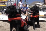 Bau Watch, sulla spiaggia di Mondello cani bagnino in azione - Video