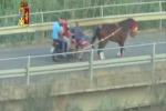 Scoperta e fermata corsa clandestina di cavalli a Palagonia, 5 denunciati - Video
