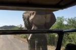 Schwarzenegger faccia a faccia con un elefante durante un safari - Video