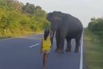 Bimba riesce ad allontanare un elefante: il video fa il giro del web