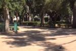 Dilaga la Pokemon go mania: giovani palermitani prendono d'assalto il Giardino Inglese