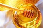 Piogge e parassiti, è allarme miele: anche in Sicilia cala la produzione