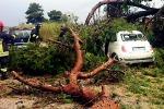 Tre Fontane, albero su auto: salvi per miracolo