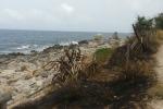 La Riserva di Capo Gallo divorata dalle fiamme, i cittadini lanciano una petizione - Foto