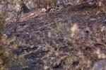 Monte Pellegrino «ferito», la conta dei danni - Video