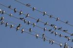 Marsala, «i nidi non si toccano»: lavori bloccati