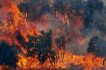 La Sicilia continua a bruciare, roghi a Piazza Armerina: l'emergenza rientra a Ragusa