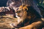 Dai leoni agli elefanti, a rischio estinzione il 60% dei grandi mammiferi