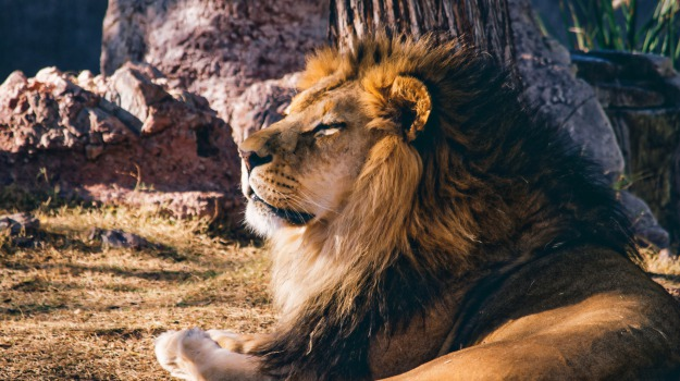 estinzione, mammiferi, Sicilia, Società