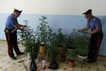 Coltivazione di cannabis, arrestato un uomo a Tortorici