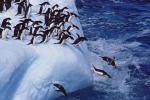 Vulcano in attività, oltre un milione di pinguini a rischio in Antartide
