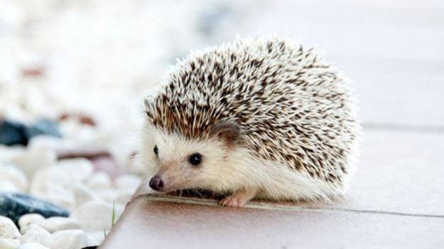 ricci, vita segreta, Sicilia, Animali, Vita