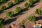 Turismo del vino, la Sicilia resta indietro