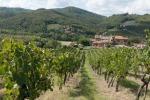 Agricoltura, successo del Ragusano grazie all'export