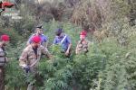 Nebrodi, sorpreso a irrigare coltivazione di canapa: arrestato assessore comunale