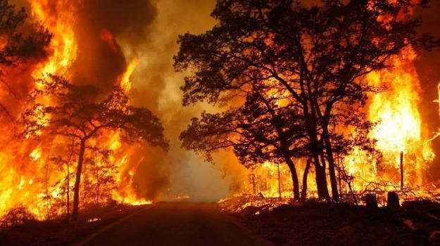 incendi in sicilia, Sicilia, Cronaca